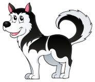 Immagine 1 di tema del cane del husky Fotografia Stock
