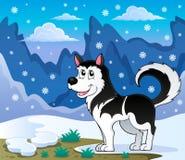 Immagine 2 di tema del cane del husky Fotografia Stock Libera da Diritti