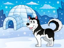 Immagine 3 di tema del cane del husky Fotografie Stock Libere da Diritti