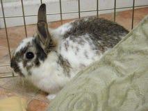 Immagine di un coniglietto della madre, corredi non in foto Fotografia Stock
