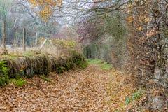 Immagine di un percorso di pietra con molte foglie asciutte e un recinto di filo spinato immagini stock