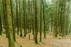 Immagine di una foresta in pieno degli alberi con e senza le foglie con i loro tronchi verdi immagine stock libera da diritti