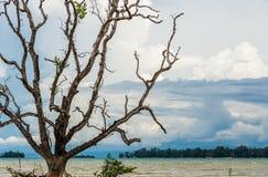 Immagine di vecchio grande albero con il mare nel fondo Fotografie Stock