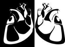Immagine di vettore del cuore umano Immagine Stock Libera da Diritti