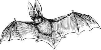 Pipistrello Immagini Stock