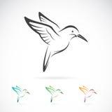 Immagine di vettore di una progettazione del colibrì Immagine Stock Libera da Diritti