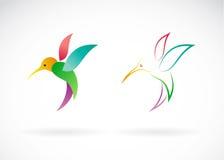Immagine di vettore di una progettazione del colibrì Immagine Stock