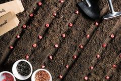Immagine di vista superiore di piantatura dei semi in suolo fotografia stock