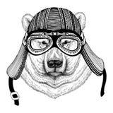 Immagine disegnata a mano dell'orso polare del casco d'uso animale del motociclo per la maglietta, tatuaggio, emblema, distintivo Immagine Stock Libera da Diritti