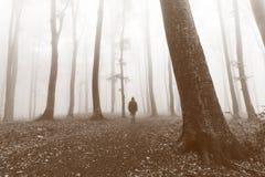 Immagine filtrata della traccia calma della foresta Fotografia Stock Libera da Diritti
