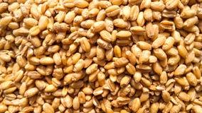 Immagine fresca del primo piano dei semi del grano fotografia stock libera da diritti