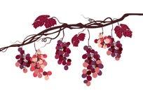 Immagine grafica di Sstylized di una vite con l'uva rosa Fotografie Stock Libere da Diritti