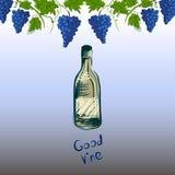 Immagine grafica stilizzata di una vite con l'uva Illustrazione di Stock