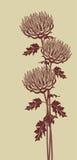 Immagine grafica verticale dei crisantemi su un fondo beige Fotografia Stock
