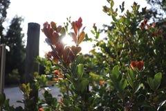 Immagine impressionante di luce solare tramite le foglie di una pianta fotografia stock