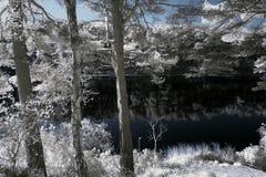Immagine infrarossa surreale del paesaggio di bello colore falso del lago a Immagini Stock
