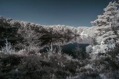 Immagine infrarossa surreale del paesaggio di bello colore falso del lago a Fotografia Stock Libera da Diritti