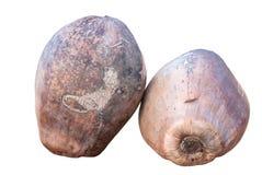 Immagine isolata delle noci di cocco Immagini Stock Libere da Diritti