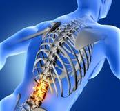 immagine medica 3D della figura medica blu con la spina dorsale più bassa royalty illustrazione gratis