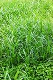 Immagine naturale della foglia verde Foresta ed albero verde della giungla Bello paesaggio naturale Giungle tropicali profonde Au immagine stock
