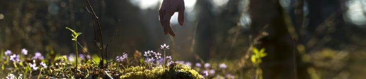 Immagine panoramica di bella natura con la mano maschio che indica la a Immagini Stock