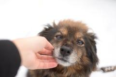Immagine potata del cane del girlwith all'aperto Cynologist immagini stock