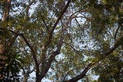 Immagine-sotto il grande albero di verde della natura fotografie stock