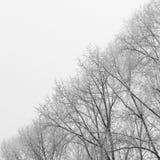 Immagine spaccata dei rami di albero di BW da due mezzi Ying Yang Black e fotografia stock libera da diritti