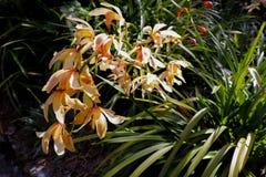 Immagine splendida dell'orchidea nell'ambito della luce solare fotografie stock libere da diritti
