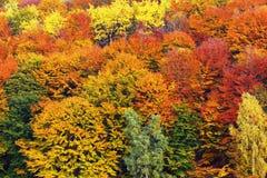 Immagine strutturale del fogliame di autunno Fotografie Stock Libere da Diritti