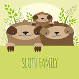 Immagine sveglia della famiglia di bradipo Fotografia Stock