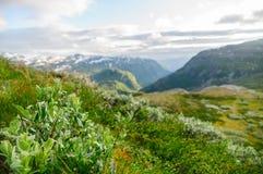 Immagine vaga della valle dell'altopiano di estate Fotografia Stock Libera da Diritti
