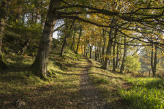 Immagine variopinta del paesaggio della foresta di Autumn Fall nel aroun della campagna Fotografie Stock