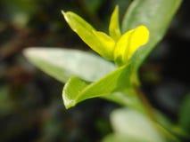 Immagine verde di macro della foglia Fotografia Stock
