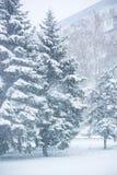 Immagine verticale della neve, delle precipitazioni nevose e degli abeti immagini stock libere da diritti