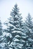 Immagine verticale delle precipitazioni nevose e degli abeti fotografia stock libera da diritti
