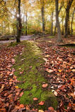 Immagine vibrante di paesaggio della foresta di caduta di autunno Immagini Stock