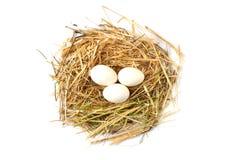 Immagini dei galli domestici, immagini del gallo e polli, immagini dei polli organici naturali del villaggio, polli di naturale-f Fotografia Stock Libera da Diritti