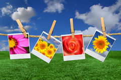 Immagini del Polaroid dei fiori contro un bello cielo Immagini Stock Libere da Diritti