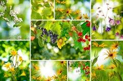 Immagini della miscela delle piante differenti e dei frutti Immagine Stock
