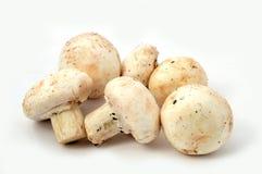 Immagini di alta qualità e nuove dei funghi coltivati immagine stock libera da diritti