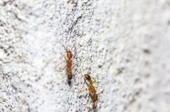 Immagini di bei macro insetti Immagine Stock Libera da Diritti
