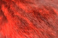 Immagini di riserva della pelliccia del fondo rosso di struttura immagine stock