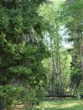 Immagini di sfondo naturali di autunno immagine stock libera da diritti