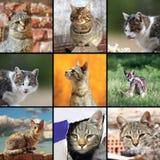 Immagini divertenti dei gatti Fotografia Stock Libera da Diritti