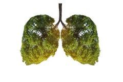 Immagini a forma di albero di verde del polmone, concetti medici, autopsia, esposizione 3D ed animali come elemento immagine stock