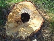 Immagini potate dell'intaglio in legno adatte a disegni pubblicitari Fotografia Stock Libera da Diritti