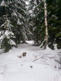 Immagini romantiche di inverno fotografia stock libera da diritti