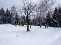 Immagini romantiche di inverno immagine stock