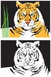 Immagini stilizzate della tigre Fotografie Stock Libere da Diritti